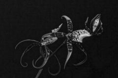 Carre_Daniel-Orchidees