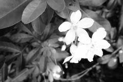 GD-fleur