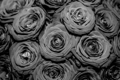 JJG-Roses-1